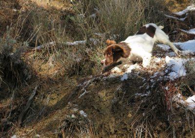 Luna de cachorro buscando trufas