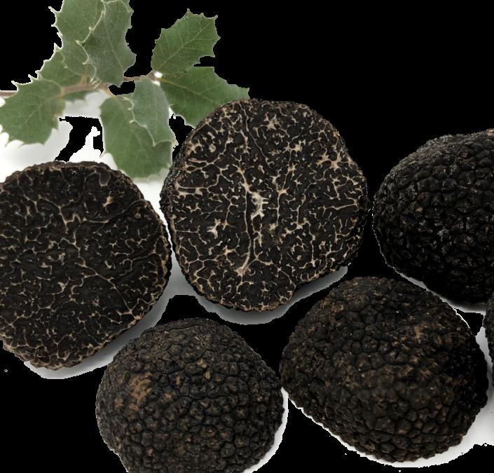 Sustrato con Esporas para Trufas - Cultivar Trufas