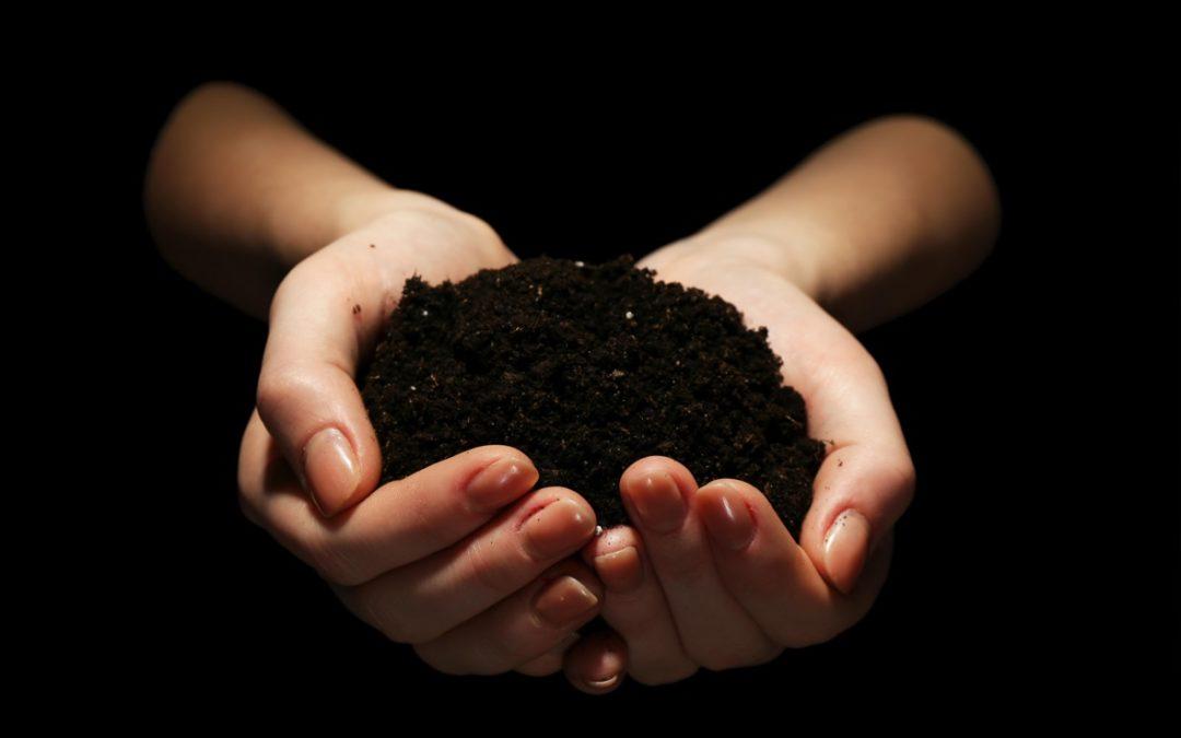 Plantación trufas negras Andalucia