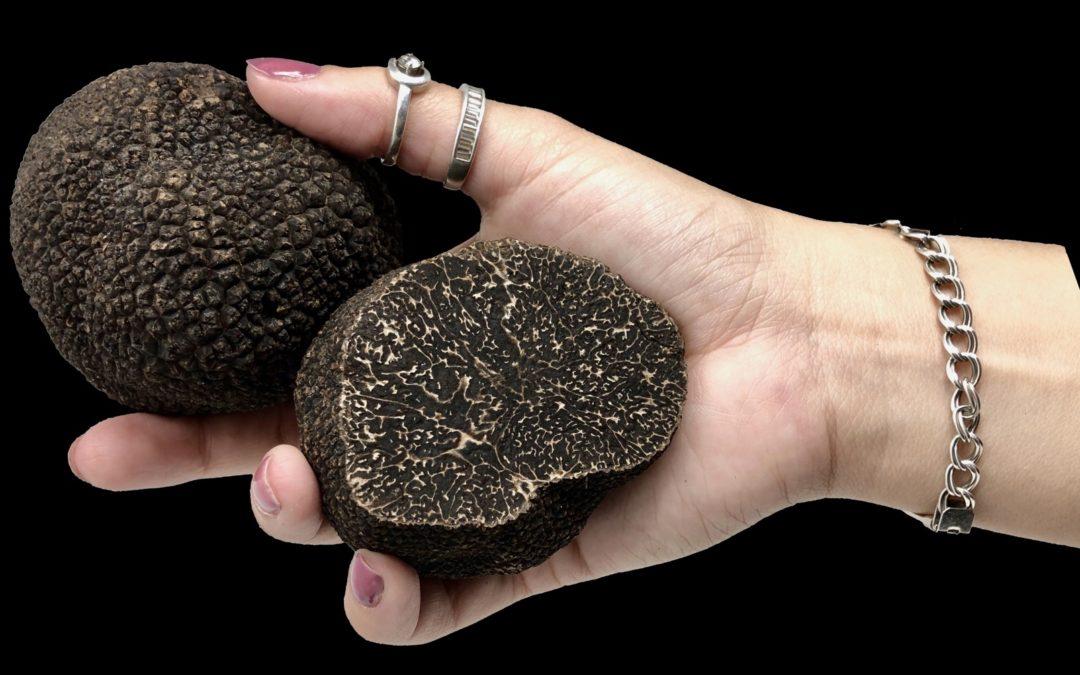 Esporas para Truficultura - Cultivar Trufas