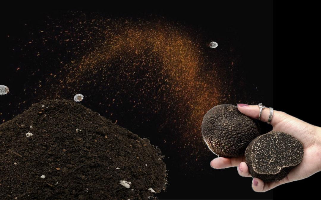 Productos para Truficultura - Cultivar Trufas